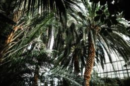 1 sesja slubna w palmiarni 1 uai