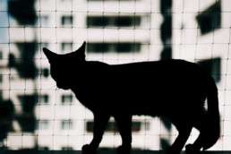 10 kot w domu uai