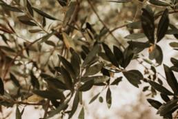 2 sesja slubna na greckiej wyspie zakynthos gaj oliwny 4 uai