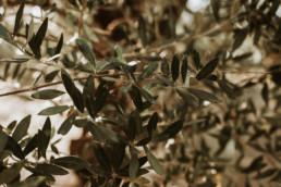 2 sesja slubna na greckiej wyspie zakynthos gaj oliwny 9 uai