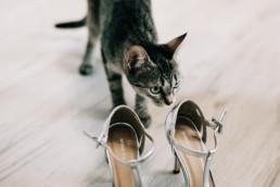 21 kot i buty do tanca uai