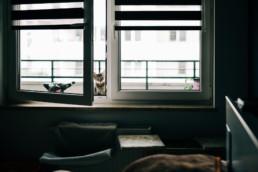 3 kot domowy uai