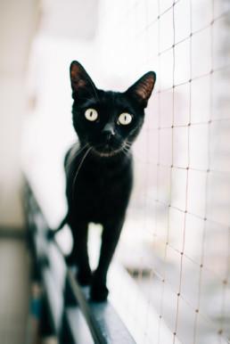 30 kot czarny 1 uai