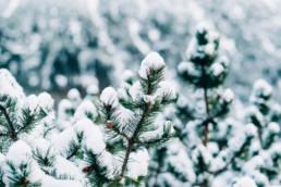33 zimowa sesja slubna w tatrach 14 uai
