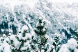 33 zimowa sesja slubna w tatrach 15 uai