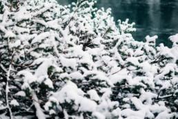 33 zimowa sesja slubna w tatrach 7 uai