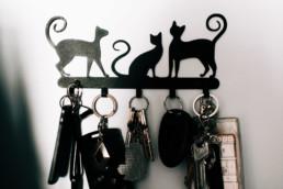4 kot i klucze uai