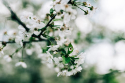 4 sesja slubna na wiosne 14 uai