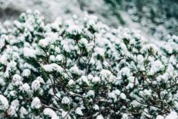 4 zima w gorach uai