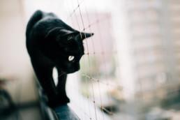 5 przygotowania slubne z kotem uai