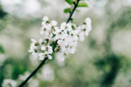 5 sesja slubna w kwitnacym sadzie 15 uai