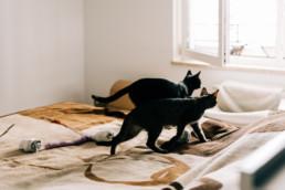 76 biegnace koty uai