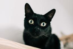 8 czarny kot uai